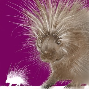 Joel Haynes Animals Squared - Porcupine